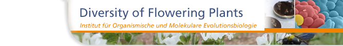 Diversity of Flowering Plants